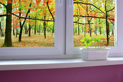Young plants of oaks on the window-sill and view to the oak forest royalty free stock photos