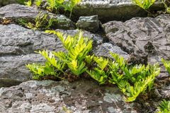 Young plants on old stone wall Royalty Free Stock Photos