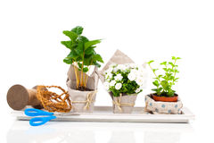 Young plants in the package offered for sale Royalty Free Stock Photo