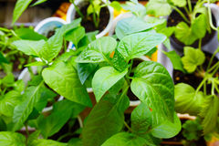 Young plants paprika seedlings. Among other plants stock photography