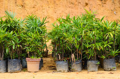 Young plants in pots are ready to be places in the ground. Fresh and green Stock Photography