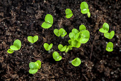 Young plants in the soil Stock Photo