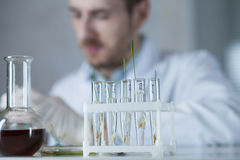 Young plants in test tubes Stock Photo