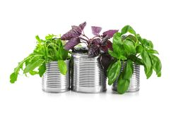 Young plants in tin cans isolated on white Royalty Free Stock Photography