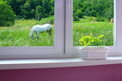 Young plants on the window-sill and view to the meadow with grazing horse royalty free stock photography