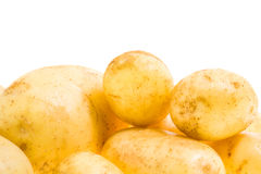 Young potato Stock Photography
