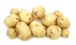 Young potato. Plant an early young potato on a white background Stock Image