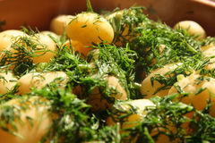 Young potato with dill Stock Photos