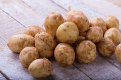 Young potato Royalty Free Stock Image