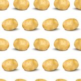 Young potato isolated on white background. Harvest new. Flat lay, top view. Young potato seamless pattern isolated on white background. Harvest new. Vector Royalty Free Stock Photos
