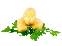 Young potatoe Royalty Free Stock Photos