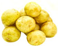 Young potatoes Stock Image