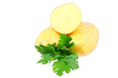 Young potatoes Stock Images