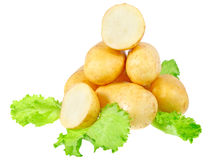 Young potatoes Stock Photography