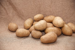 Young potatoes. On canvas close up Royalty Free Stock Image