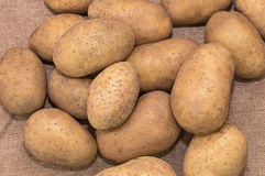 Young potatoes. On canvas close up Stock Photography