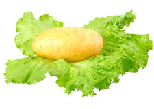 Young potatoes, decorating of lettuce . Isolated Stock Photo