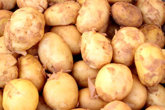 Young potatoes. Heap of young potatoes on a horizontal photo Royalty Free Stock Images