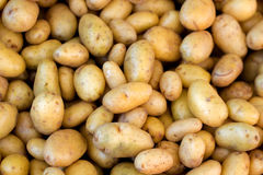Young potatoes on a market Royalty Free Stock Image