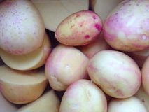 Young potatoes Royalty Free Stock Photos
