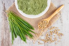 Young powder barley, barley grass and grain on jute canvas. Young powder barley in bowl, barley grass and grain on jute canvas, healthy nutrition and lifestyle Royalty Free Stock Images