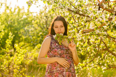Young pregnant woman in blooming garden stock photos