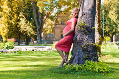 Young pregnant woman in park Stock Image
