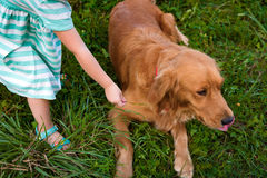 Young preschool girl playing with her cute pet dog royalty free stock images