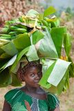 Ugandan woman with banana hat. Young and beautiful woman coming from street market carrying cooking bananas on head