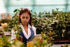 Young pretty Asian woman agronomist with tablet working in greenhouse inspecting the plants Royalty Free Stock Image