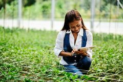 Young pretty Asian woman agronomist with tablet working in greenhouse inspecting the plants royalty free stock photos