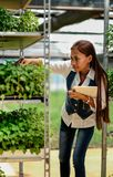 Young pretty Asian woman agronomist with tablet working in greenhouse inspecting the plants Royalty Free Stock Images