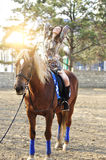 Young pretty brunette riding horse outdoor.  Stock Photo