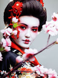 Young pretty geisha in black kimono among sakura, asian ethno close up Stock Photography