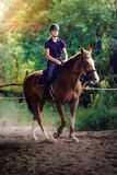 Young pretty girl riding a horse with backlit leaves behind Royalty Free Stock Images