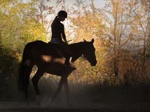 Young pretty girl - riding a horse with backlit leaves behind Royalty Free Stock Photo