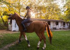 Young pretty girl - riding a horse with backlit leaves behind Stock Photography