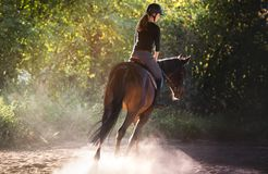 Young pretty girl riding a horse with backlit leaves behind Stock Photos