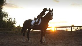 Young pretty girl riding a horse on sunset stock video footage