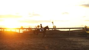 Young pretty girl riding a horse on sunset stock video