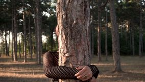 Young Pretty Punk Girl in Collar and Black Cloth with Pink Hair Hiding Behind the tree in Pine Forest at Sunset Time. Lifestyle Slow Motion stock video footage