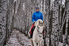 Young pretty woman in a blue jacket and a sports hat for a walk with a white horse. In the winter birch forest stock photography