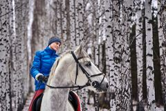 Young pretty woman in a blue jacket and a sports hat for a walk with a white horse. In the winter birch forest stock photos