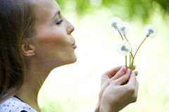 Young pretty woman with dandelions Royalty Free Stock Images
