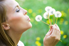 Young pretty woman with dandelions Stock Photography