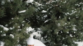 Young pretty woman play with snowballs in forest. stock video footage