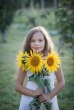 Young pretty woman on a sunflowers Royalty Free Stock Photography