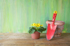 Young primrose flower and gardening tool Royalty Free Stock Photo