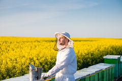Young proud apiarist. Proud apiarist, on the rapeseed field, near his hives, looking into the Sun. Selective focus, Copy space Stock Photography