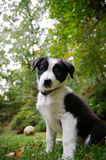 Young pup Stock Images